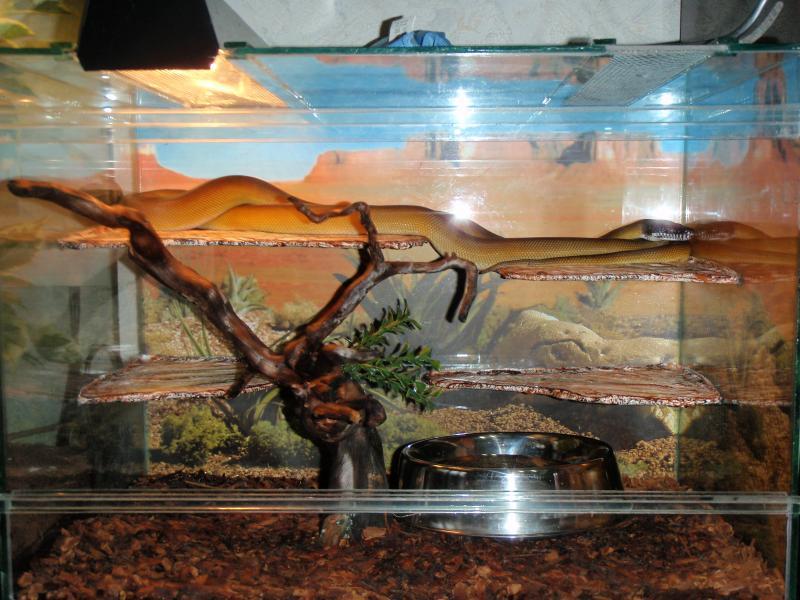 Террариумы своими руками для змеи