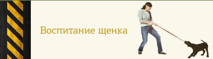 volier_3.jpg