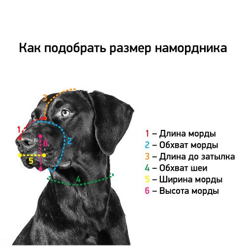 Как правильно измерить размеры намордника на собаке