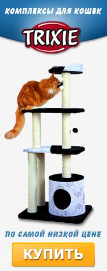 Домики и комплексы для кошек