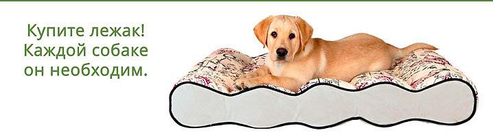 Лежак для собаки.