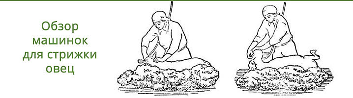 Машинки для стрижки овец — быстрая и безопасная работа