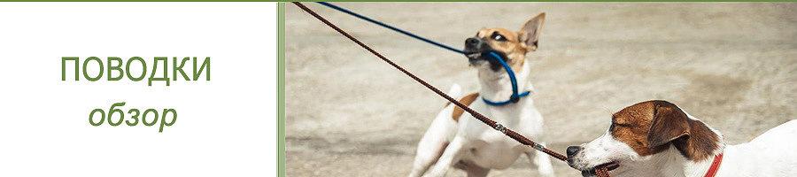 Берем собаку на поводок