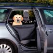 Подстилка в автомобиль для сиденья с боковыми стенками 145х65 см Trixie 13231 - общий вид с питомцем в машине