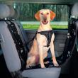 Подстилка в автомобиль для сиденья с боковыми стенками 145х65 см Trixie 13231 - вариант использования