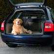 Перегородка в автомобиль для багажника раздвижная Trixie 1315 - применение