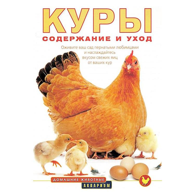 Курицы содержание и уход в домашних условиях