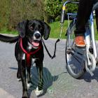 Велоспрингер для крупных собак Trixie 1287