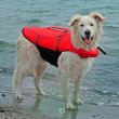 Спасательный жилет для собаки, размер M Trixie 30143 - общий вид на питомце