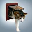 Дверь для кошки De Luxe 4 позиции коричневая Trixie 38643 - общий вид