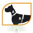 Шлейка Sport Dog P Medium фиолетовая - Шлейка Sport Dog - снятие мерок