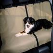 Подстилка в автомобиль для сиденья 140х120 см Trixie 13237 - общий вид с питомцем